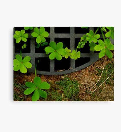Down the Drain Canvas Print