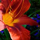 Red lily by Antanas