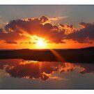 Sun blast by tracyleephoto