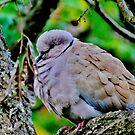 The reflecting bird by kindangel