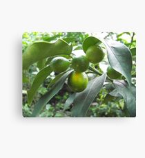 Fruitful Canvas Print