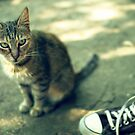 Cat and shoe by Iuliia Dumnova