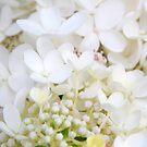 Nature's Bridal Bouquet.... by LindaR