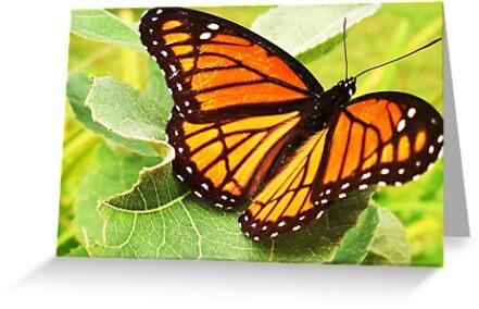 Monarch Butterfly by Seth LaGrange