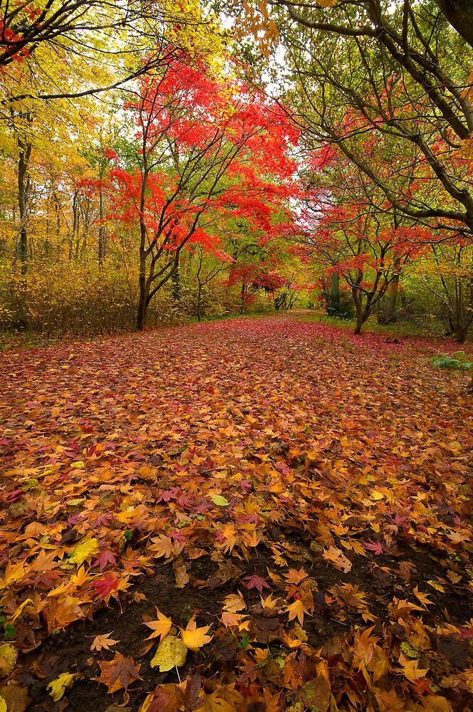 Autumn colour Alice holt forest by MikeYoung