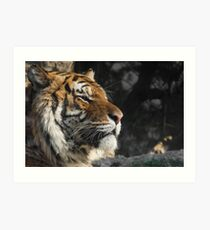 Portrait of a Siberian Tiger Art Print
