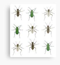 Tiger beetle trio Metal Print