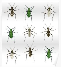 Tiger beetle trio Poster