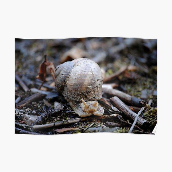 Giant Snail Poster