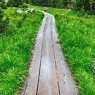 Wooden Forest Path by Bo Insogna
