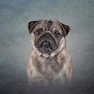 Zeichnung Hund Mops von bonidog