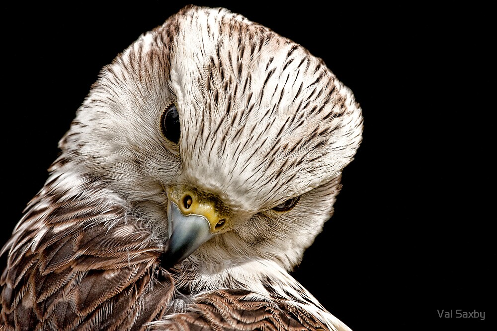 Preening by Val Saxby