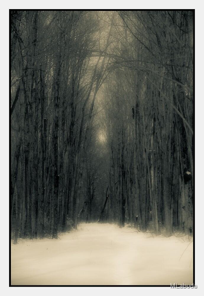 Forest In Winter by MLabuda