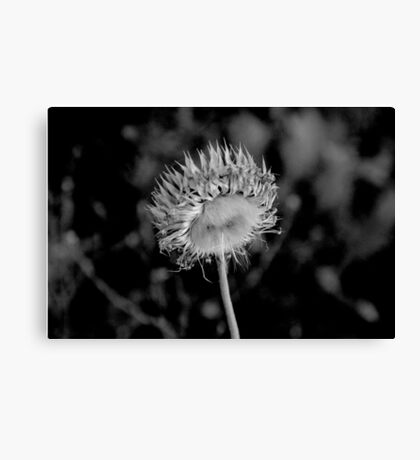Fine Nature in B&W  Canvas Print