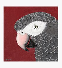Timneh African Grey Parrot Photographic Print