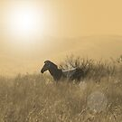 Amazing Africa by DeeCl