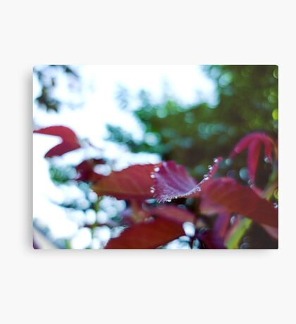 Subtle Nature Metal Print