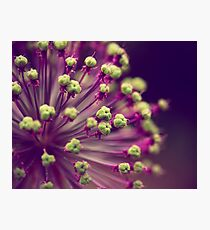 Purple and Lime Green Photographic Print