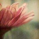 Serenity by ameliakayphotog