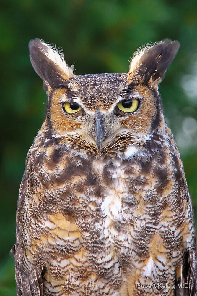 Great horned owl by Robert Kelch, M.D.