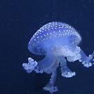 Blue Jellyfish by Karl R. Martin