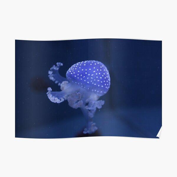 Blue Jellyfish Poster