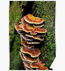 """Tree Fungus"" Poster"