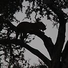 Classic africa-leopard silhouette in tree at dusk by jozi1