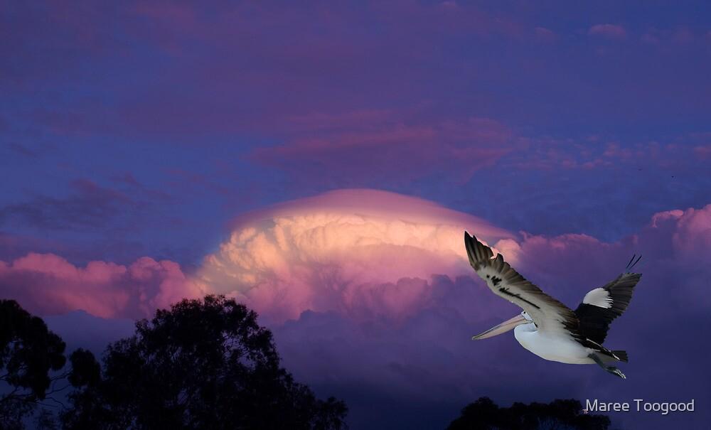 In Flight by Maree Toogood