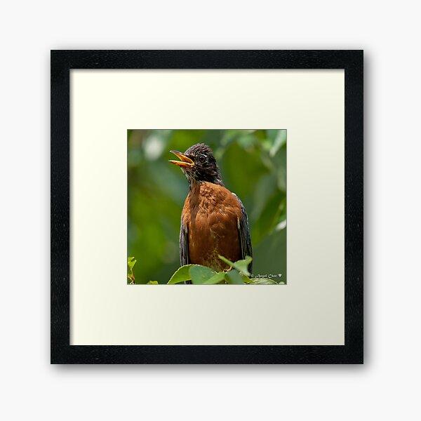Robin Mama Framed Art Print