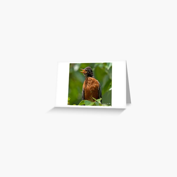 Robin Mama Greeting Card