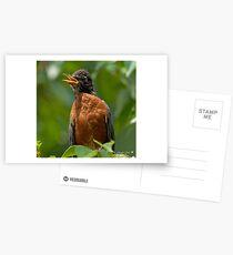 Robin Mama Postcards