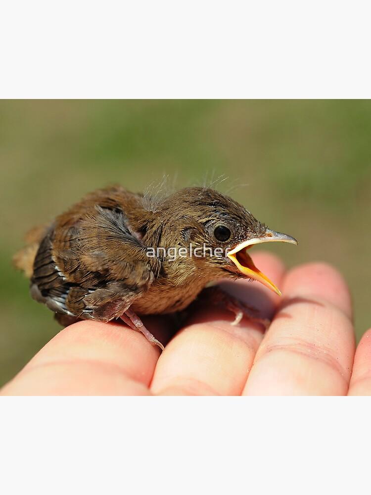 Baby Wren by angelcher