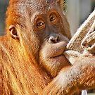 In The Eyes of an Orangutan by Sherrill Meredith