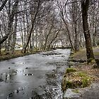 Iced Stream by Nuno Pires