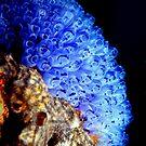 Ascidian Glow. by yook