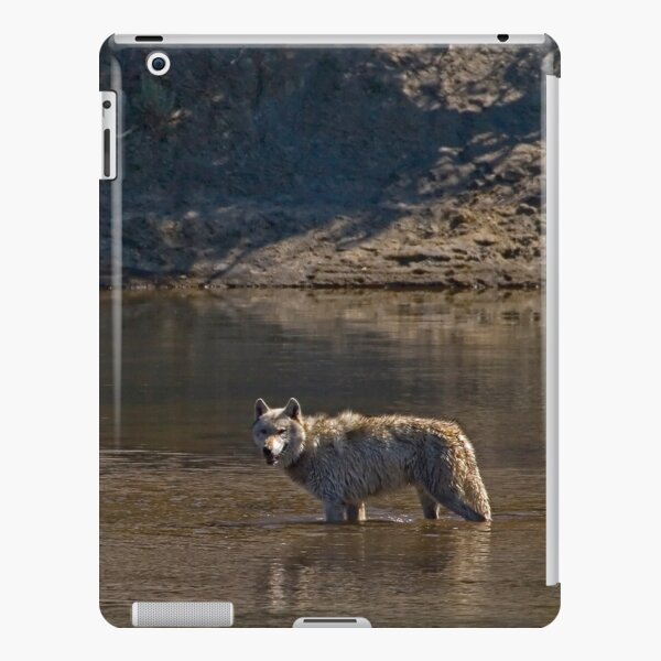 Grey Wolf In The Yellowstone River    #4363 iPad Snap Case