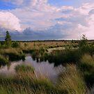 Summer in Fochtelooerveen by ienemien