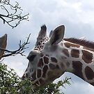giraffe by xxnatbxx