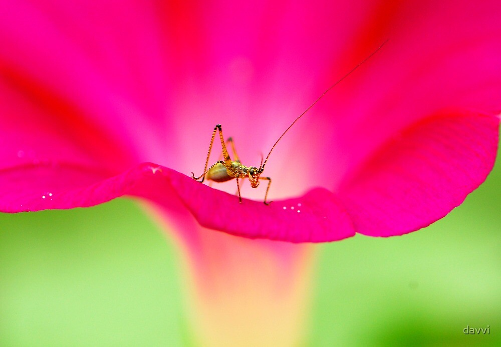 attracting by pink by davvi