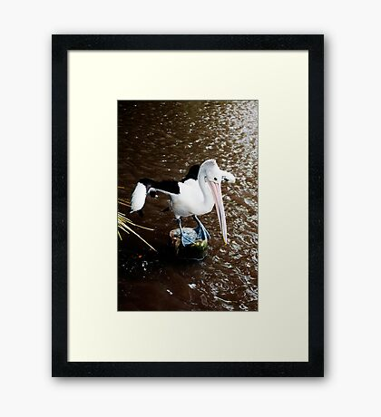 The Dancer - pelican on a perch Framed Print