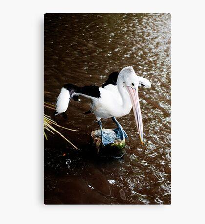 The Dancer - pelican on a perch Canvas Print