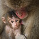 Monkey Love by Robert Chester Lee