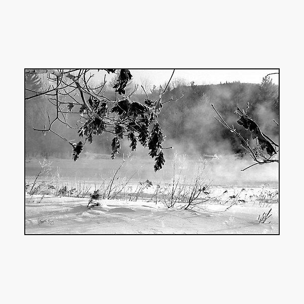 Oaks Along the Pemi Photographic Print