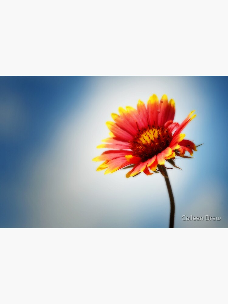 Indian Blanket by colgdrew