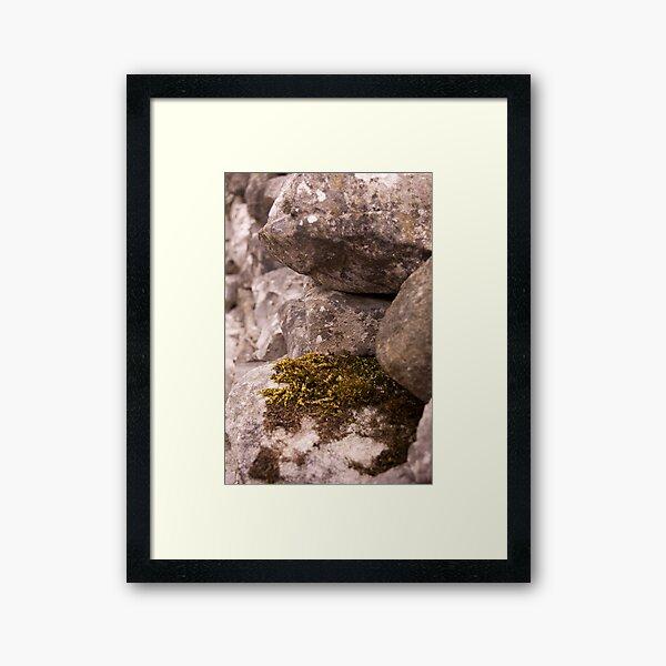 Moss and Lichen Framed Art Print