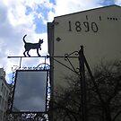 Cat in Old Praga, Warsaw, Poland by Lukasz Godlewski