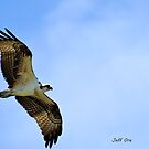 Blue Skies & Ospreys by Jeff Ore