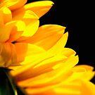 Close up of sunflower petals. by Karen  Betts