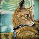 Orange Tabby Cat by minorsaint